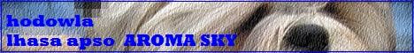 Hodowla psów rasowych lhasa apso Aroma Sky